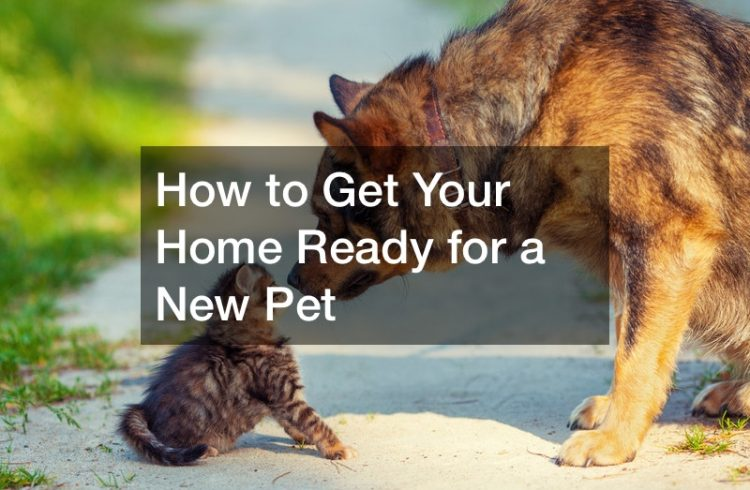 how to bring a new cat into the house